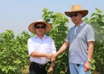 郭总与田经理在长寿茶基地考查